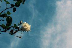 flower496