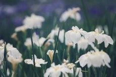 flower514