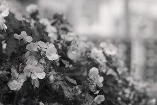 flower519-3