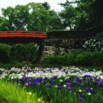 【高解像度】赤い橋が架かる菖蒲園(2パターン)