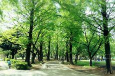 scenery331