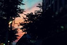 scenery385