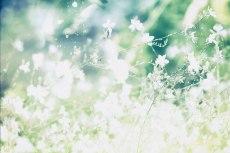 flower566-2
