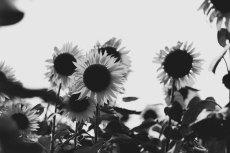 flower579-3