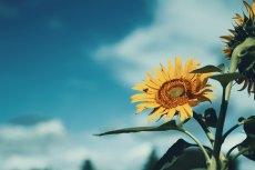 flower580
