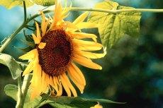 flower583