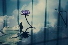 flower599-2