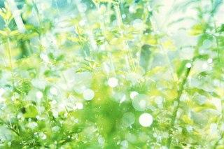 【高解像度】キラキラ光る雨粒と緑(3パターン)