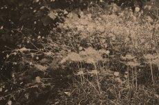 flower615-3