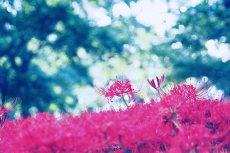 flower621-2