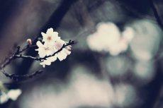 flower646