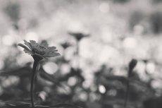 flower661-3