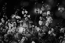 flower664-3