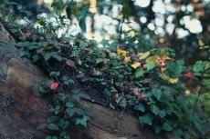 flower683