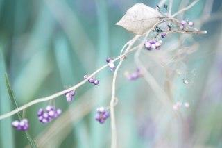【高解像度】枯葉とコムラサキの実(3パターン)