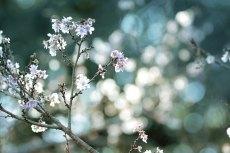 flower692