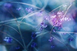 【高解像度】コムラサキの実と色の滲む背景(3パターン)