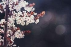 flower706