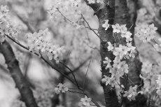 flower708-3