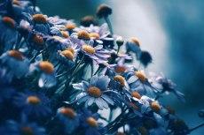 flower716-2