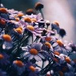 【高解像度】光を目指す花たち(3パターン)