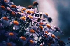 flower716