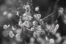 flower722-3