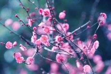 flower722