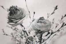 flower738-2