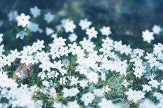 flower762