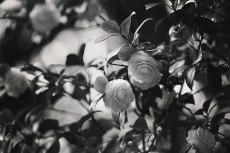 flower765-3