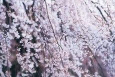 flower768