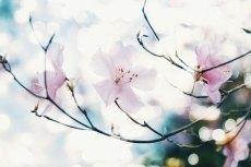 flower798
