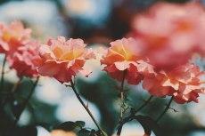 flower805