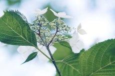 flower823