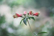 flower825-2