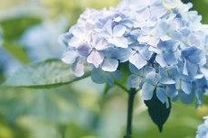 flower838