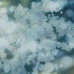 【高解像度】靄の中の庭七竈(ニワナナカマド)(3パターン)