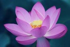 flower850