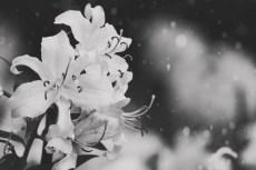 flower861-3