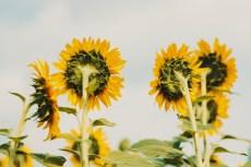 flower875-2