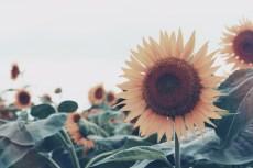 flower883-2