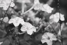 flower910-3