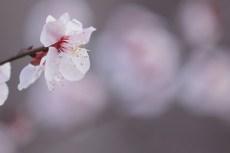 flower928