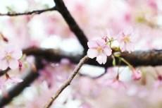 flower933