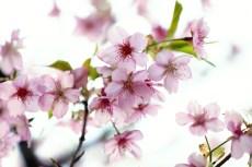 flower935