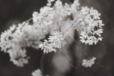 flower937-3