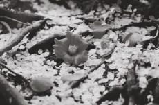 flower957-3
