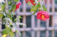 flower959-2