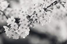 flower965-3